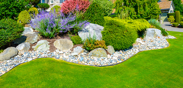 5 Proven Tips for a Stunning Lawn